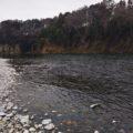 【遡上スピードの懐疑的推定】ランナーズハイな那珂川の天然遡上アユ